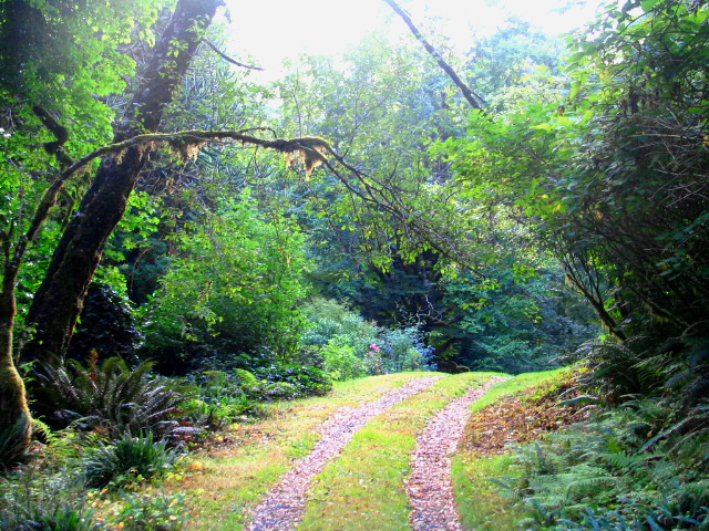 san josef wagon road @ ronnings garden