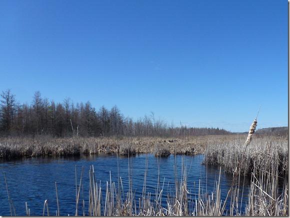 Mer Bleue, Ottawa