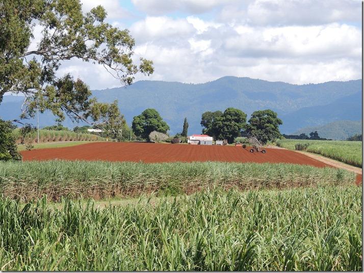 4 Red soil