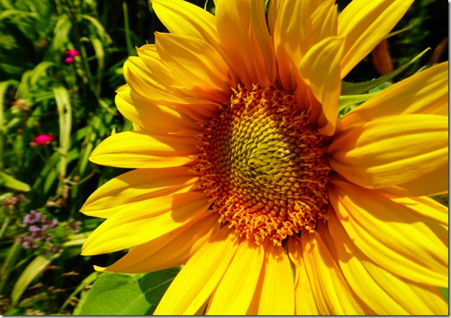 Green Party Sunflower - Guenette & Witzel photo