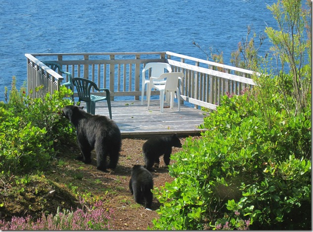 Mama bear and cubs - Guenette photo