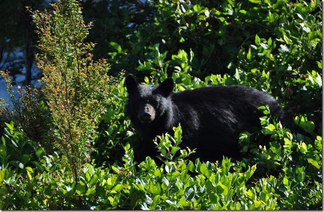 Mama Bear - Bruce Witzel photo