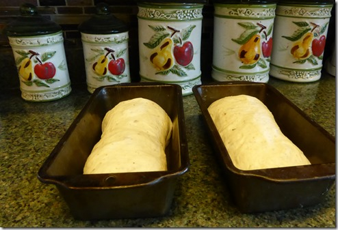 Bread in the pans - Guenette photo