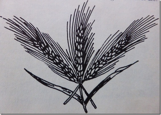 Line drawing of wheat - Guenette photo