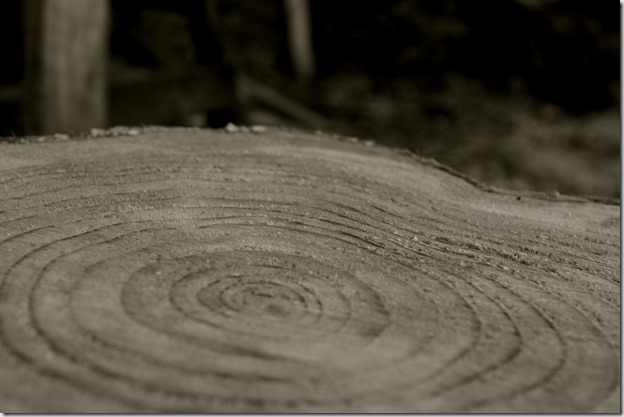 Growth rings on a stump - Matt Keeley photo