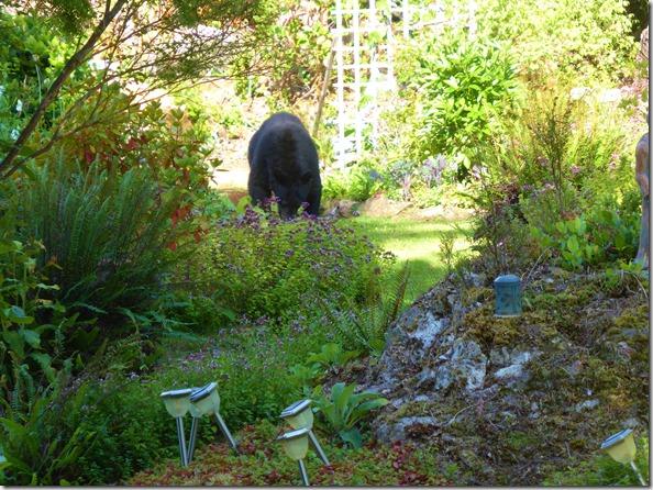 Bear in the garden - Guenette photo