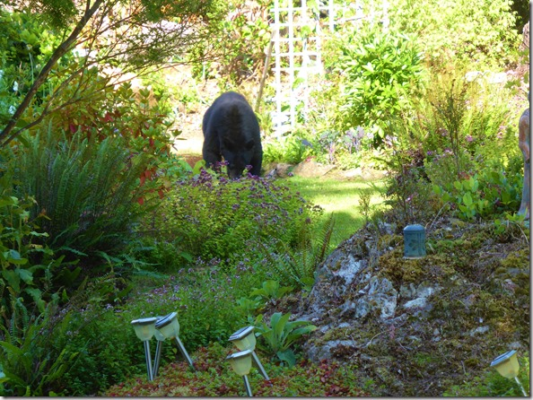 Bear in the garden - Guenette photo