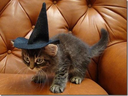cat in a witch hat - google image