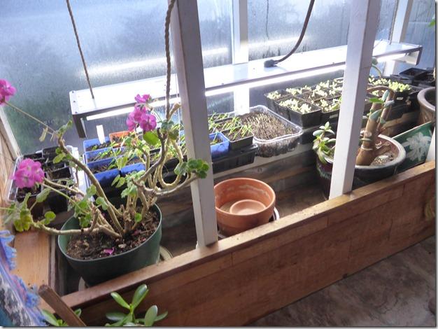 Seedlings - Guenette photo
