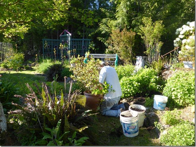A liberation gardener - Guenette photo