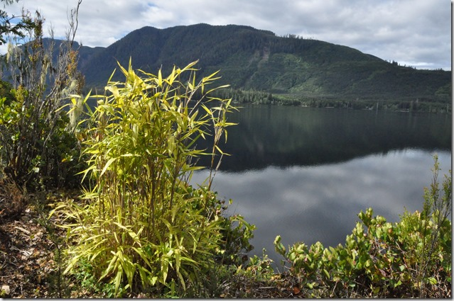 Bamboo on the cliff - Bruce Witzel photo