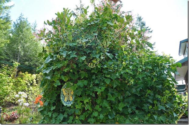 Ivy stump - Bruce Witzel photo