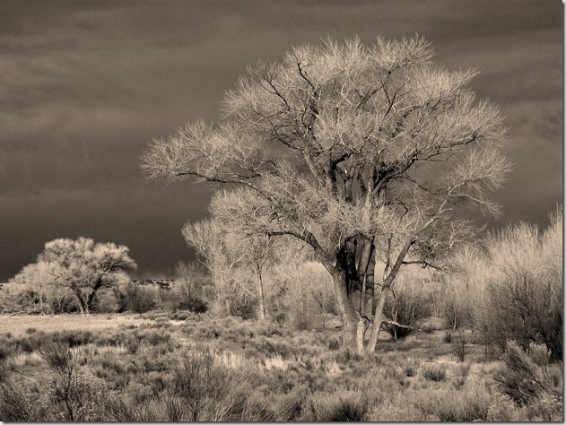 Arizona tree - Bruce Witzel photo