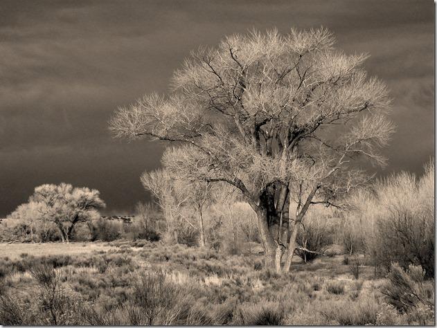 Arizona tree - Bruce Witzel photo