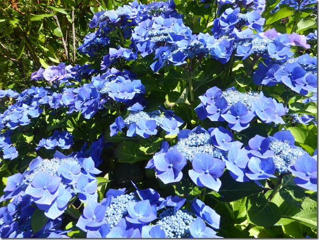 August Garden 2 - Guenette photo