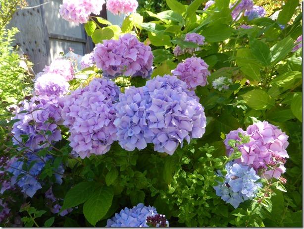 August Garden - Guenette photo