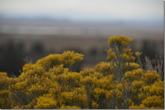 High Desert scrub brush