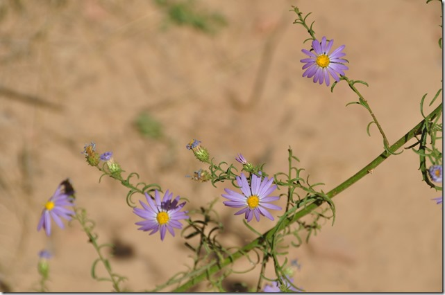 Native Flowers at Zion park (2) - bruce witzel photo