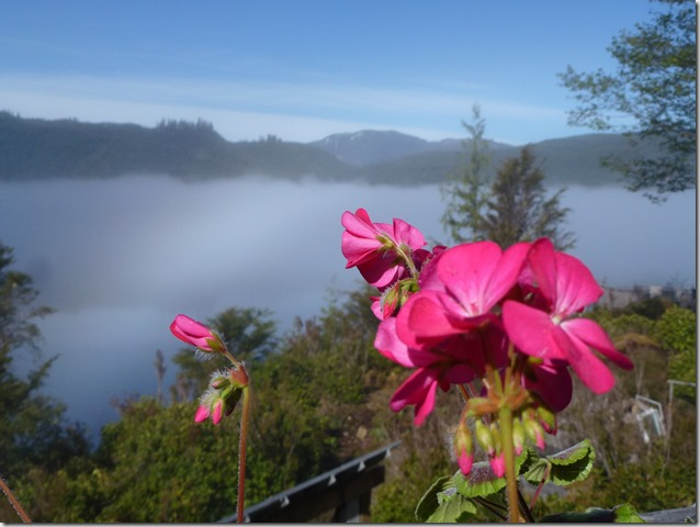 Misty morning flowers - Guenette photo