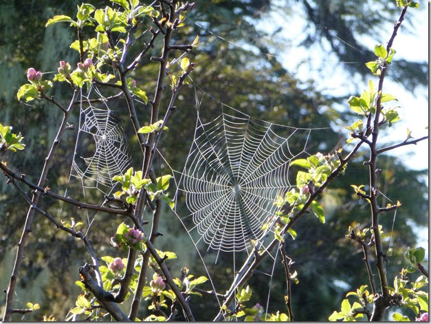 Misty morning spiderweb - Guenette photo