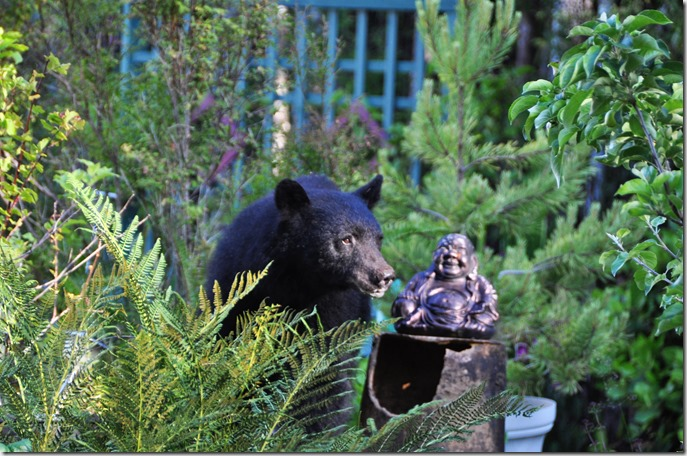 Oh my, bear and Buddha